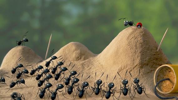 <span>Minuscule: La vallée des fourmis perdues</span>